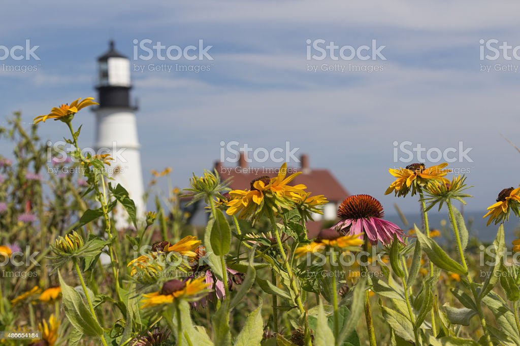 Wildflowers in front of Portland Head Light stock photo