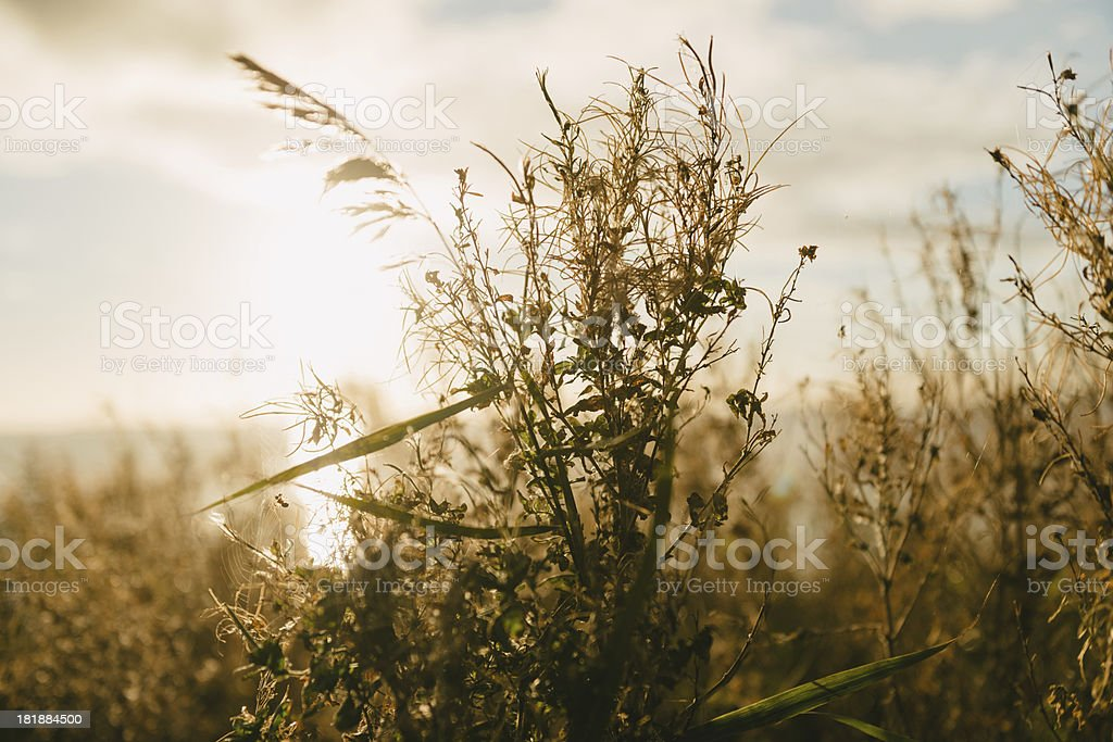 Wildflowers in meadow during sunrise royalty-free stock photo