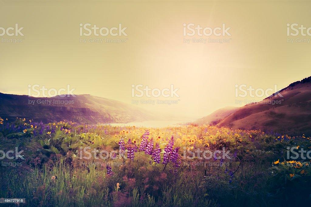 Wildflowers In Morning Sunrise stock photo