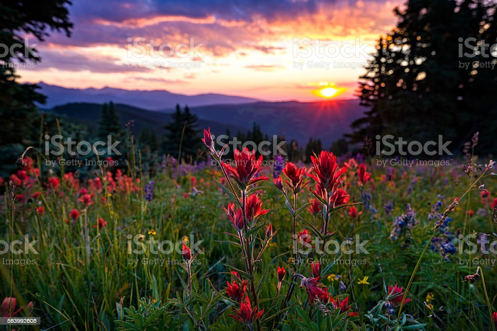 Wildflowers in Mountain Meadow at Sunset stock photo