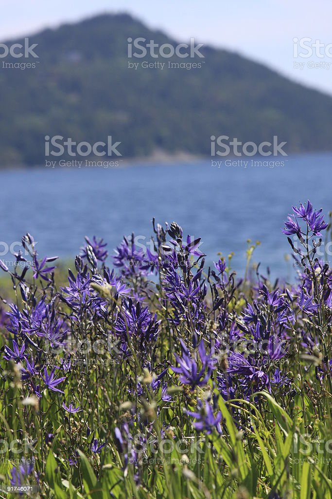 Wildflowers in Spring stock photo