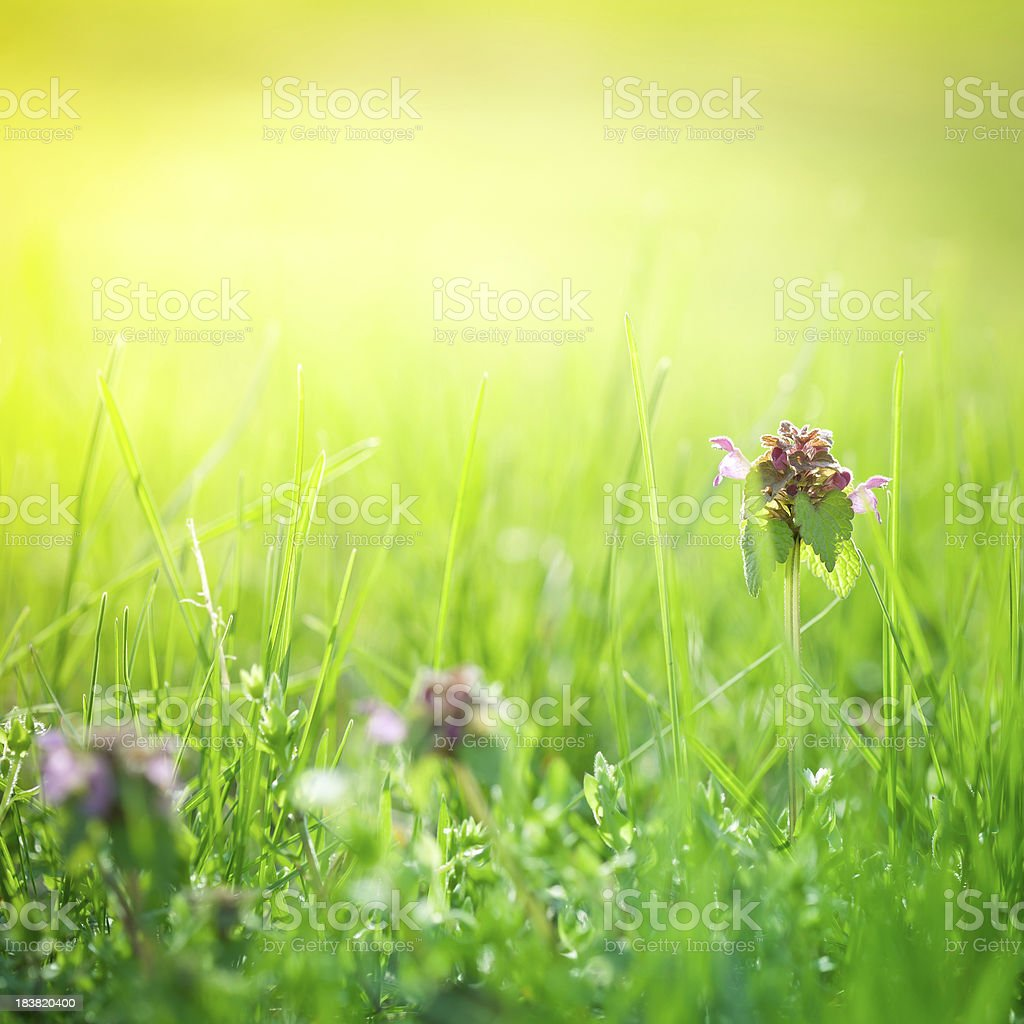 Wildflowers in the beautiful morning royalty-free stock photo