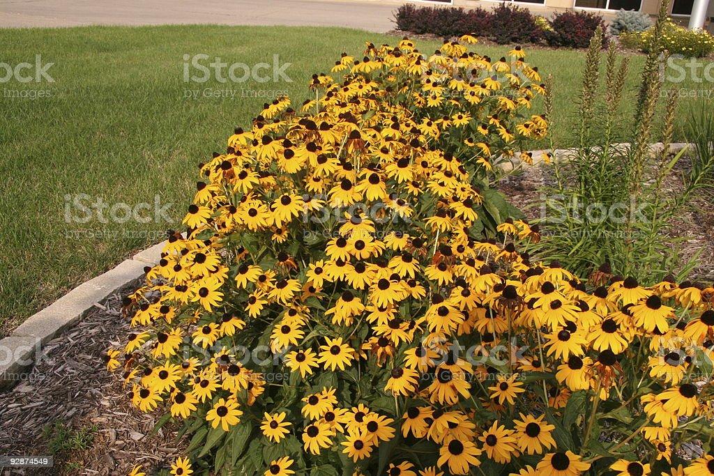 Wildflowers in the Garden stock photo