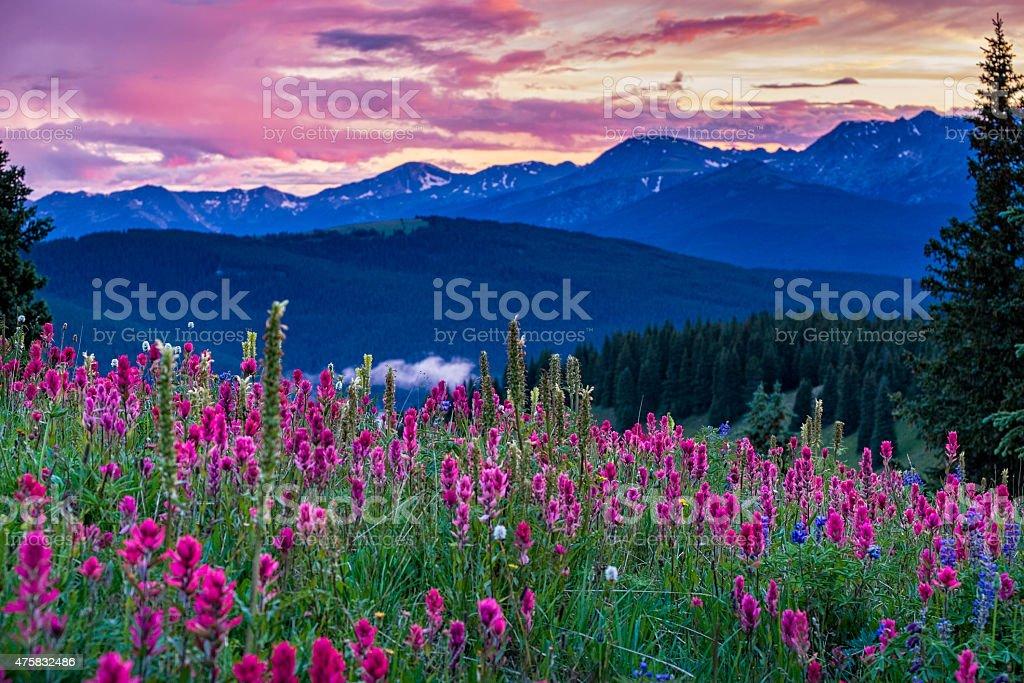 Wildflowers in the Gore Range stock photo