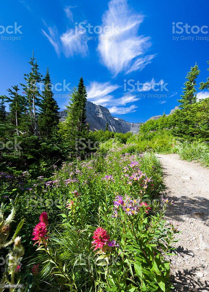 Wildflowers in the Rockies stock photo