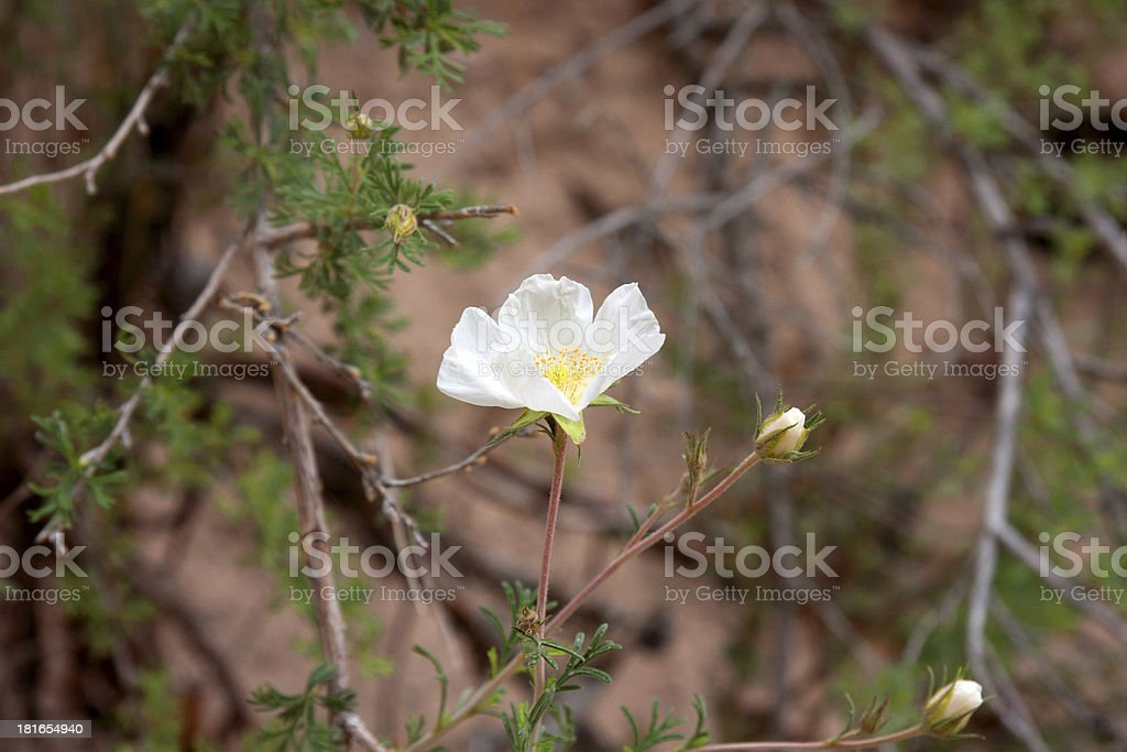 Wildflowers in the USA stock photo