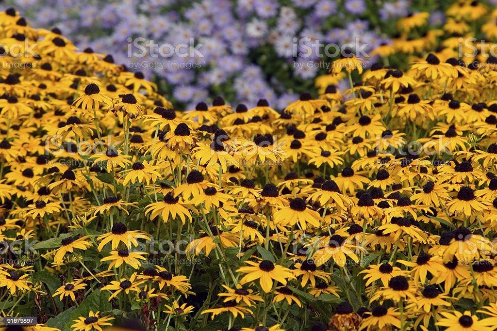 Wildflowers in Utah stock photo