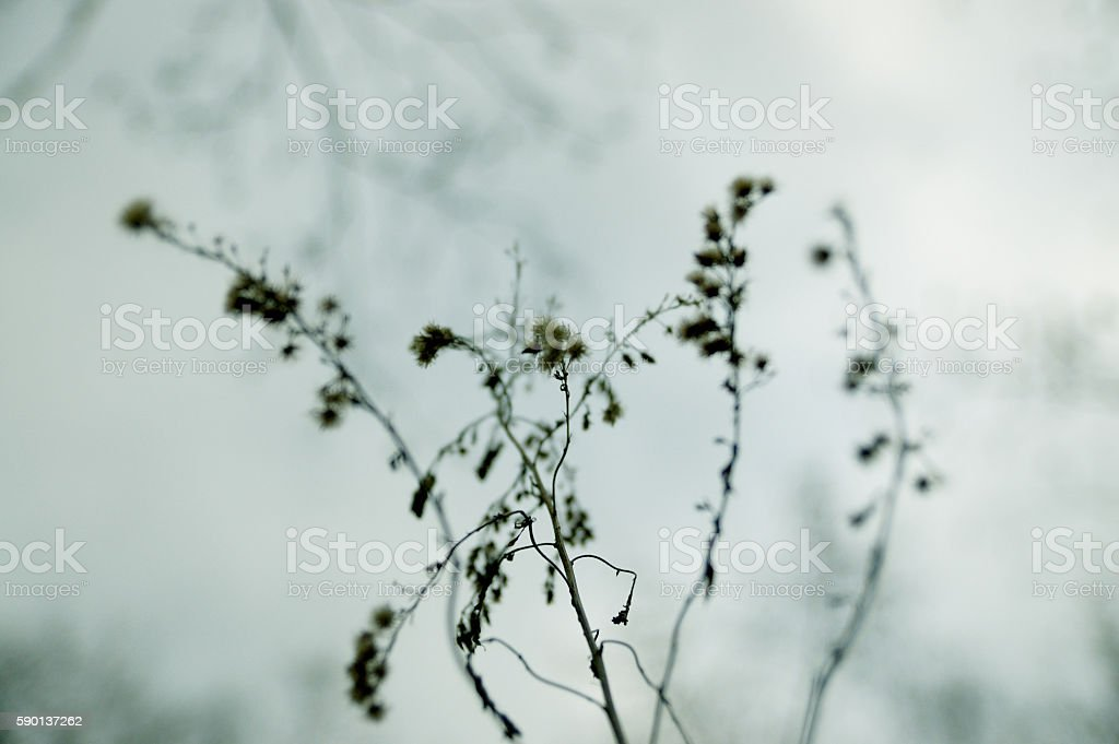 wildflowers in winter stock photo
