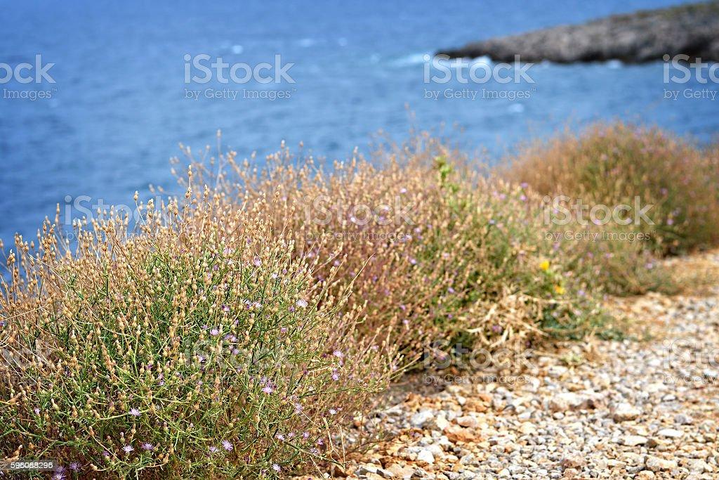 Wildflowers , Island of Krk, Croatia stock photo