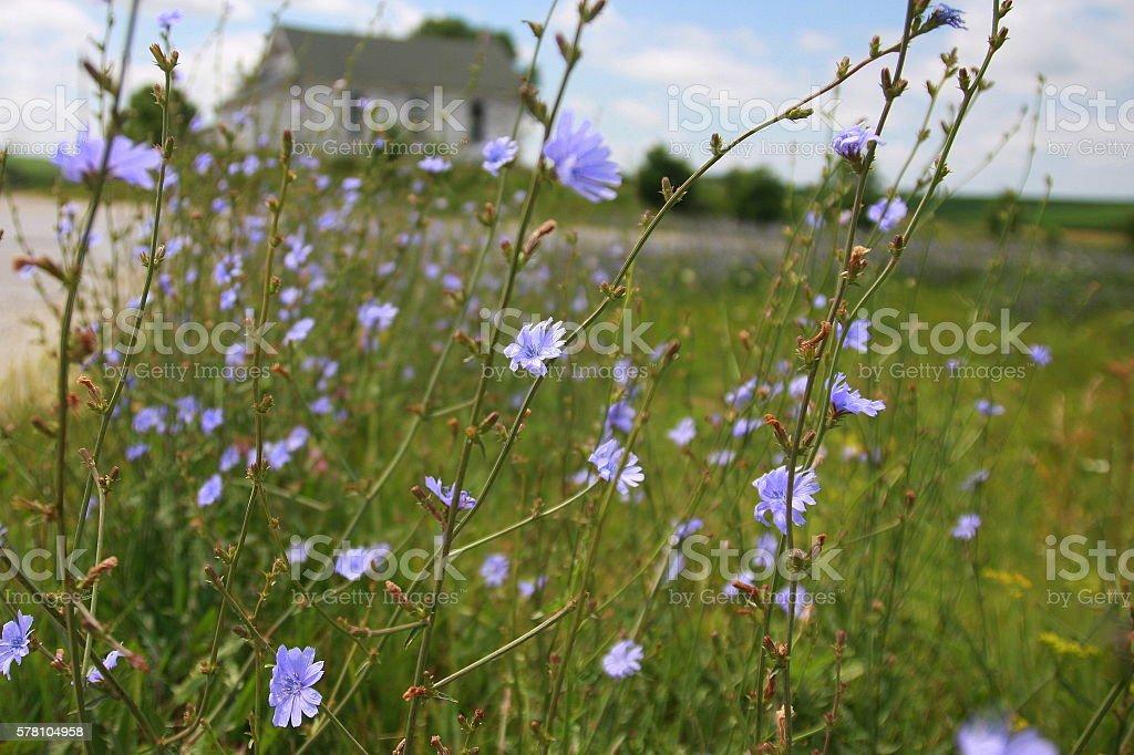 Wildflowers Near Iowa Country School stock photo
