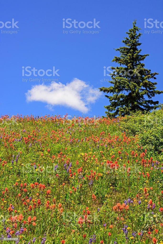 Wildflowers on a Hillside stock photo