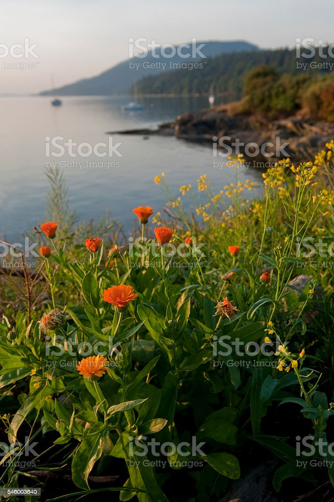 Wildflowers on an Island stock photo