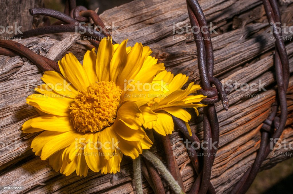 Wildflowers On An Old Western Fence Post stock photo