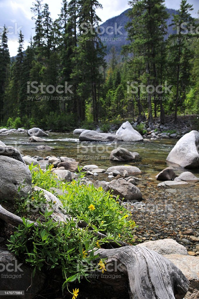 WIldflowers on Icicle Creek stock photo