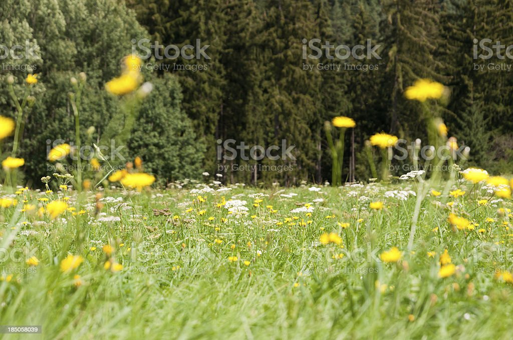 Wildflowers on the forest edge, Germany stock photo