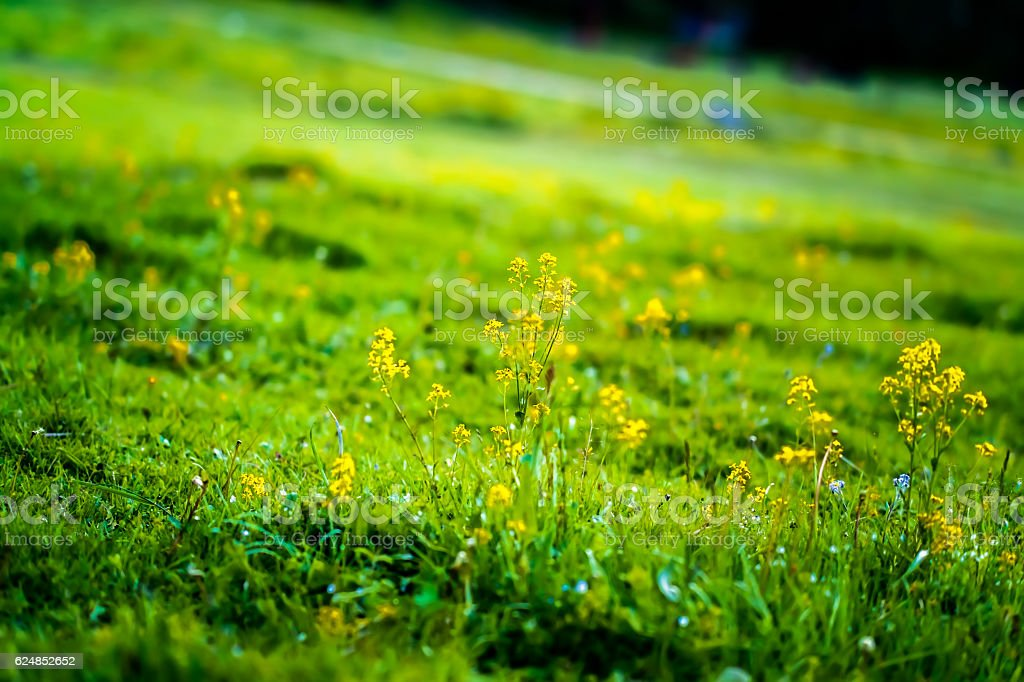 Wildflowers on the hillside stock photo