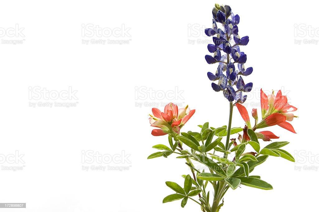 wildflowers on white stock photo