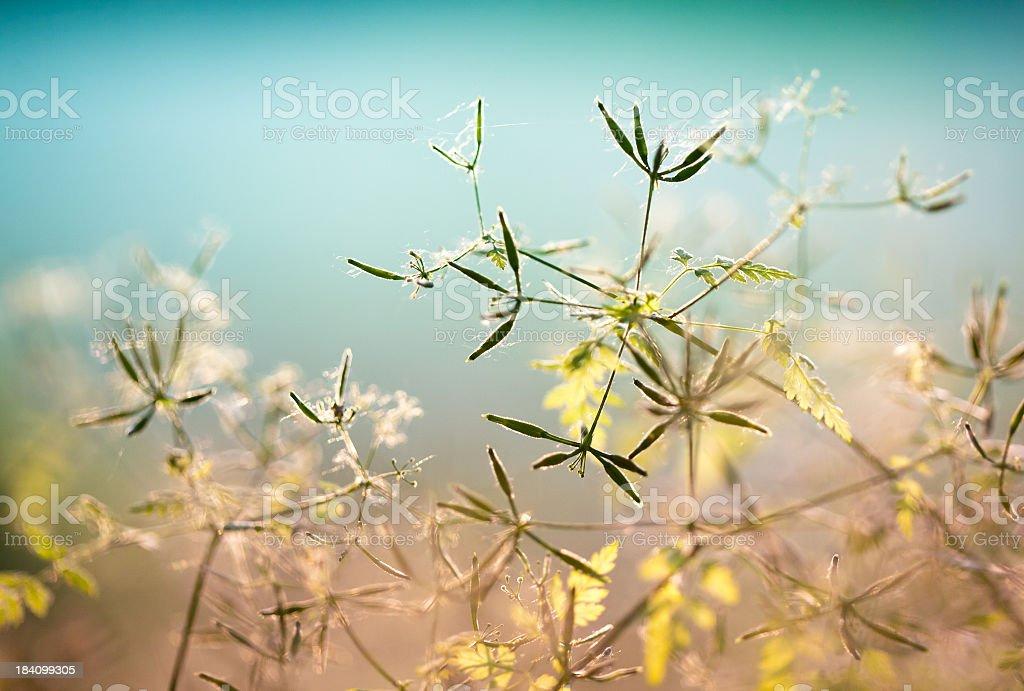 Wildflowers stock photo