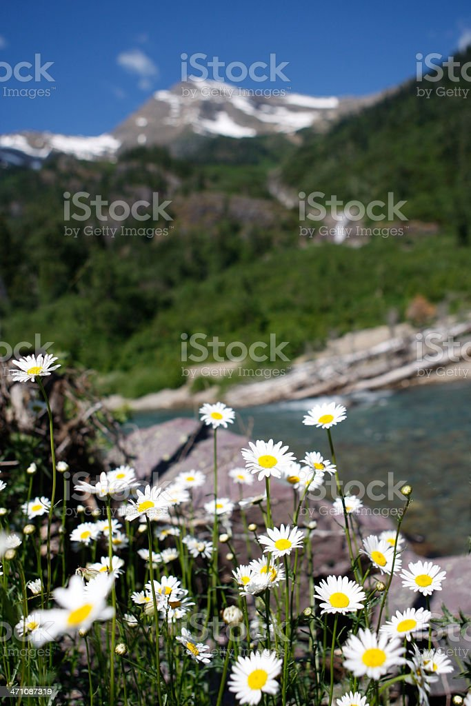 Wildflowers with mountain in background royalty-free stock photo