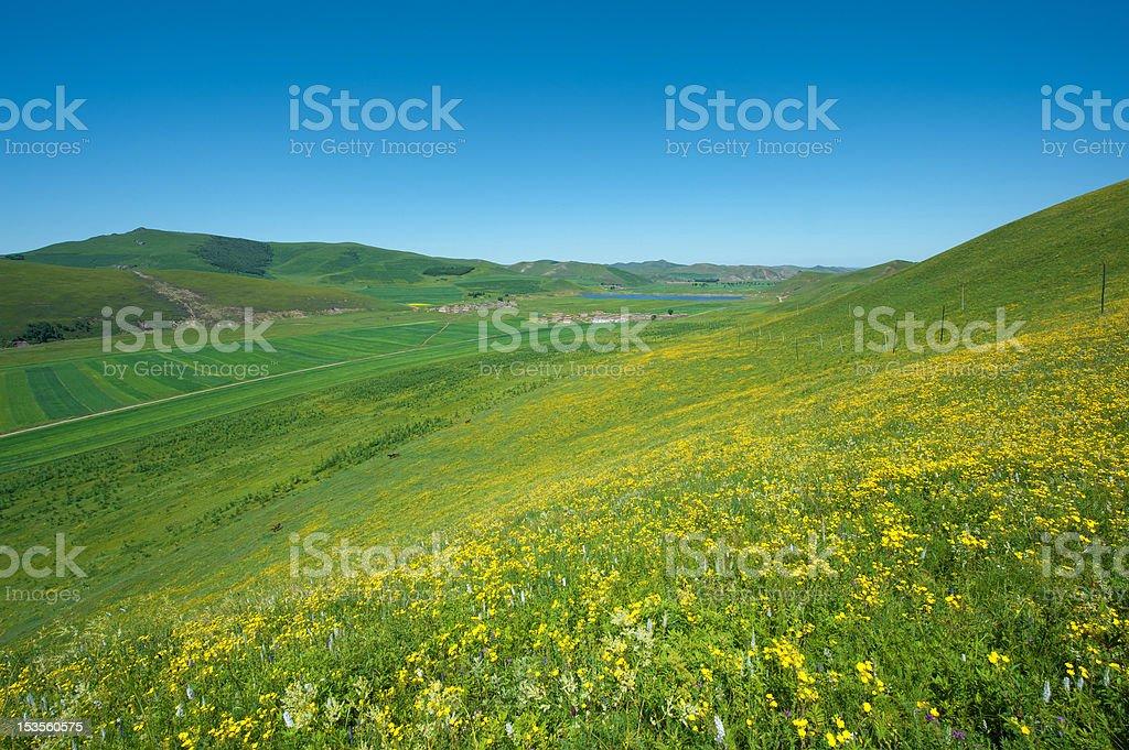 Wildflowers,Spring,Idyllic summer meadow panorama royalty-free stock photo