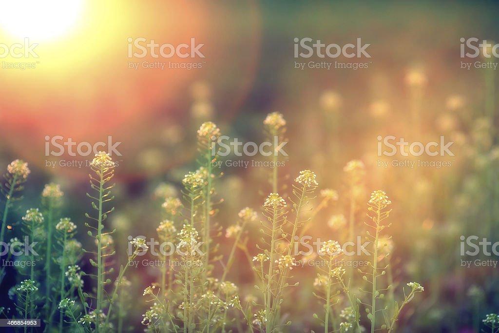 Wildflowers-XXXL stock photo