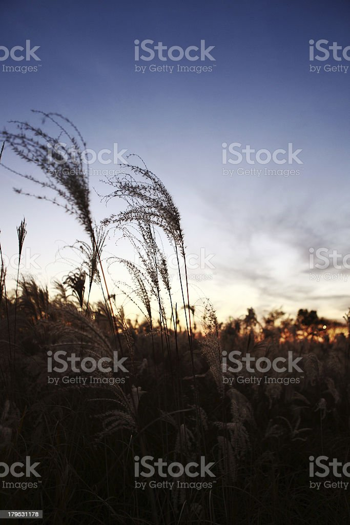 Wildgrace sunset royalty-free stock photo