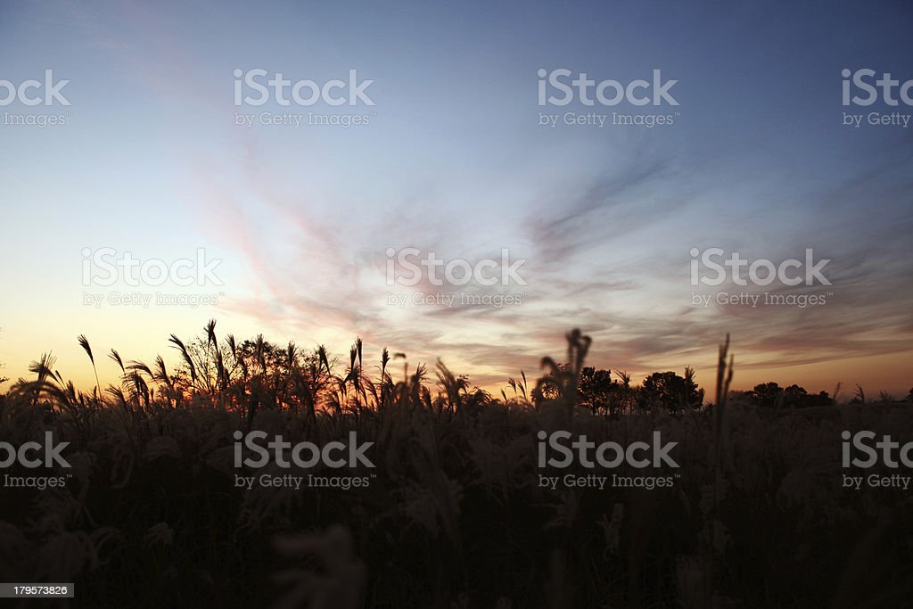 Wildgrace sunset royalty-free stock photo