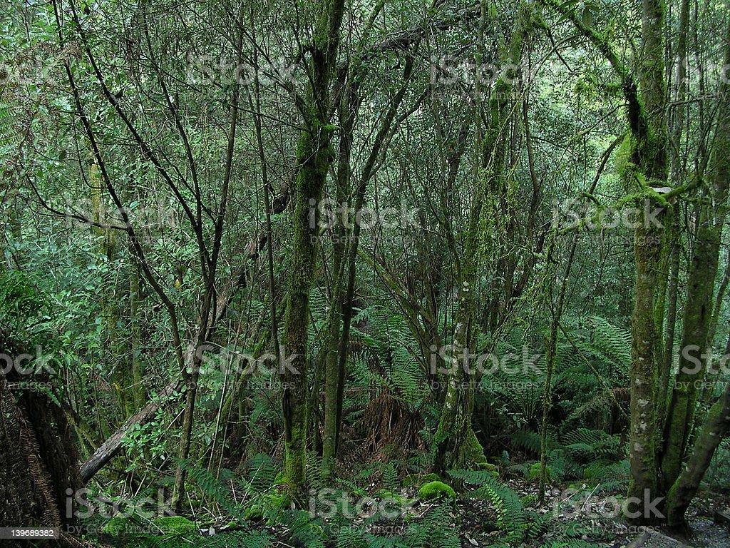 Wildgrowth stock photo