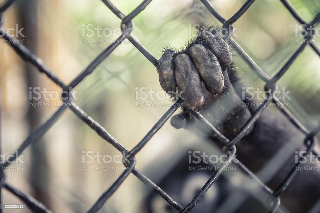 Wildlife animals in captivity concept stock photo
