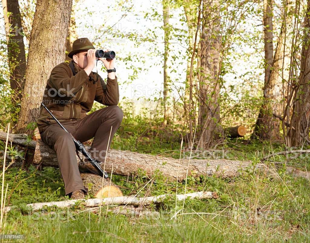 Wildlife hunting requires patience stock photo