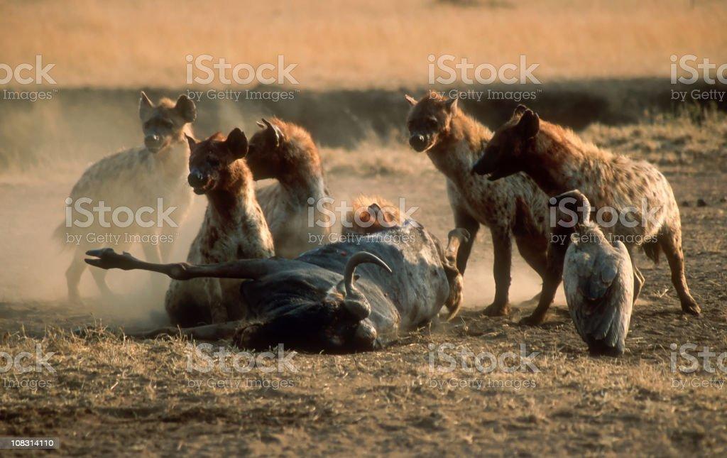 Wildlife in Serengeti stock photo