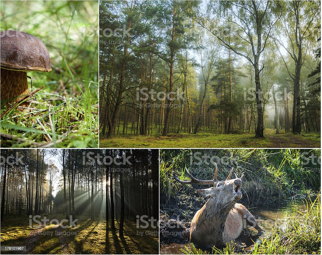 Wildlife in the nature at dawn stock photo