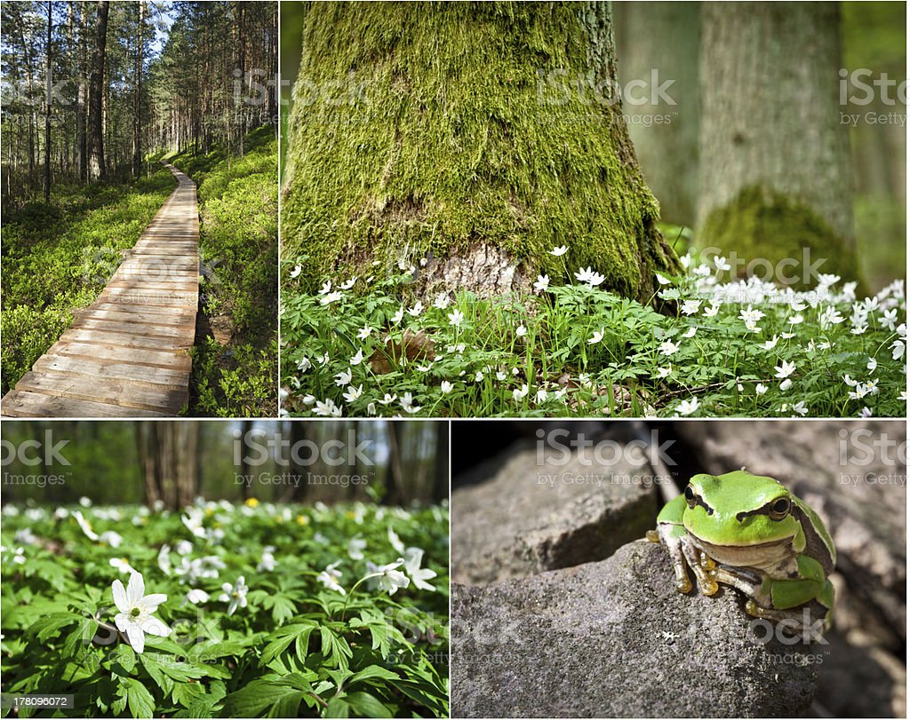Wildlife in the nature at spring royalty-free stock photo