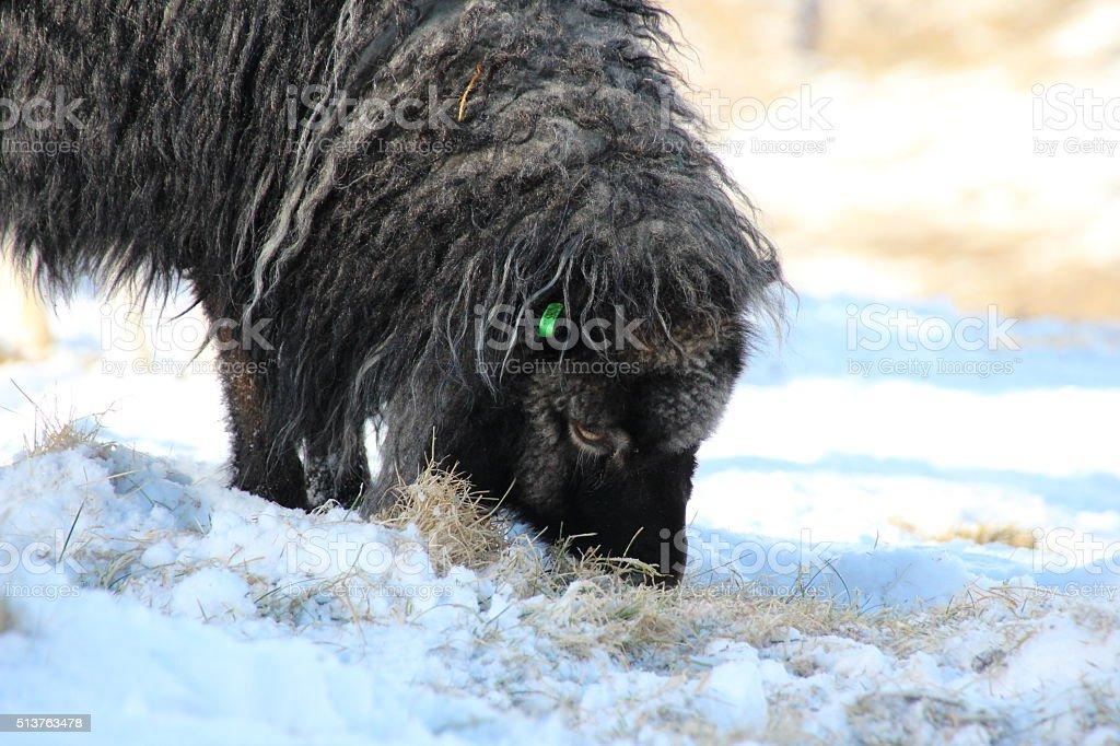 Wildlife in the winter stock photo