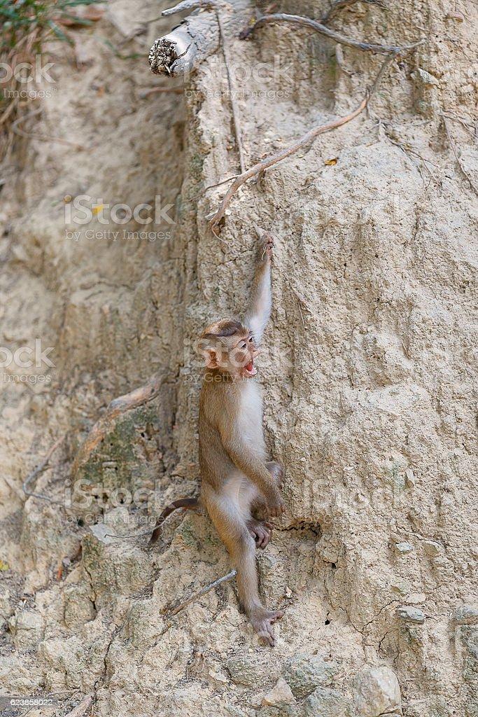 Wildlife monkey stock photo
