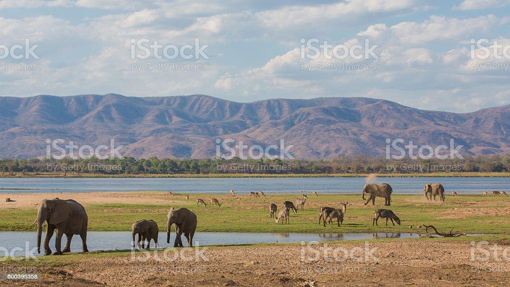 Wildlife on the Zambezi river stock photo