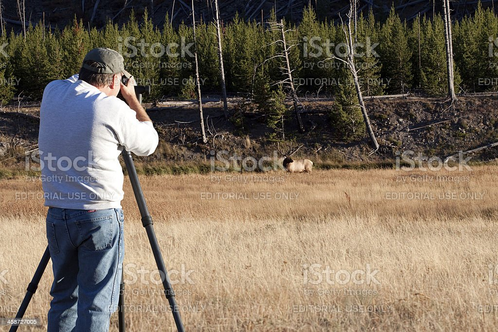 Wildlife Photographer stock photo