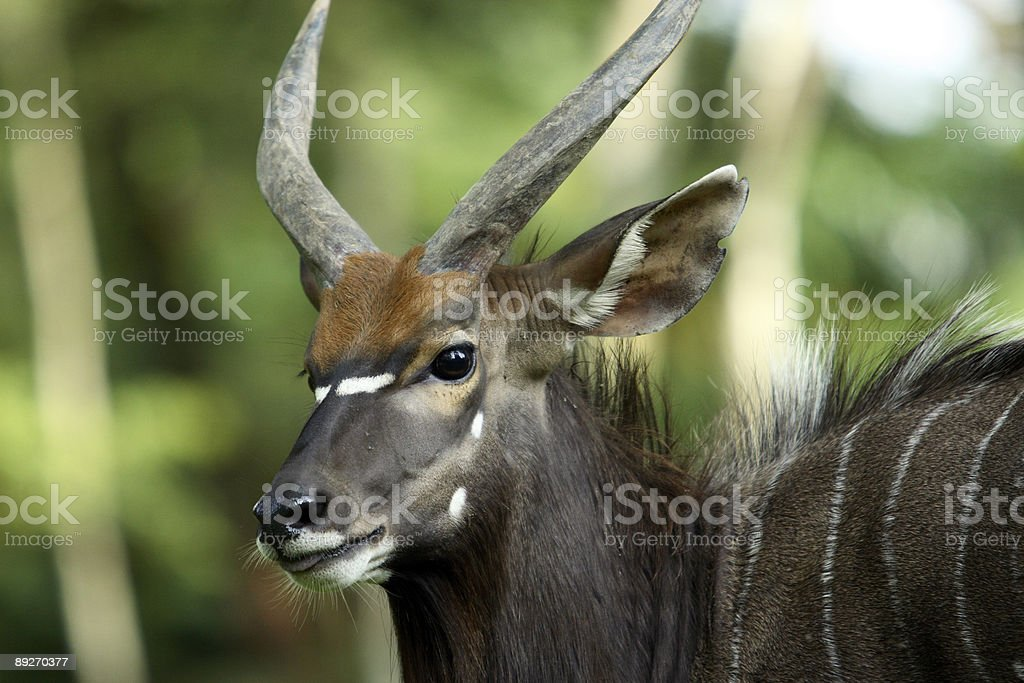 wildlife royalty-free stock photo