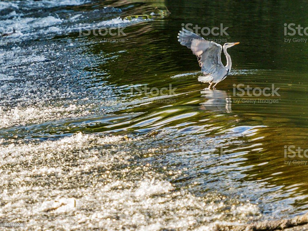 Wildlife, posing, preening and feeding in natural habitat stock photo