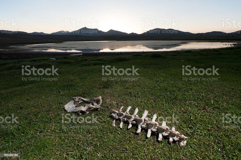wildlife protection area royalty-free stock photo