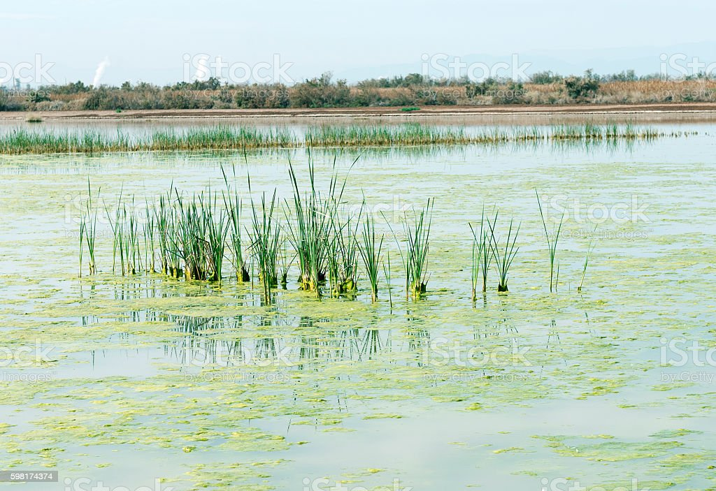Wildlife reserve near Salton Sea in southern California stock photo
