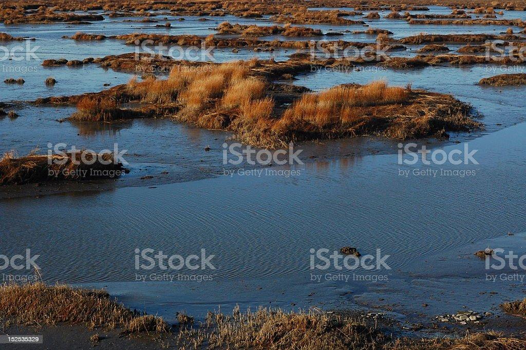 Wildlife Sanctuary Marsh stock photo