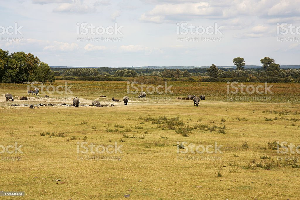 Wildlife scene royalty-free stock photo
