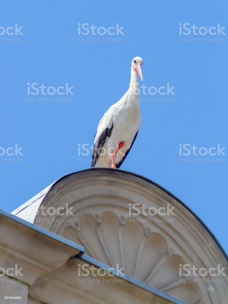 Wildlife Storch Lizenzfreies stock-foto