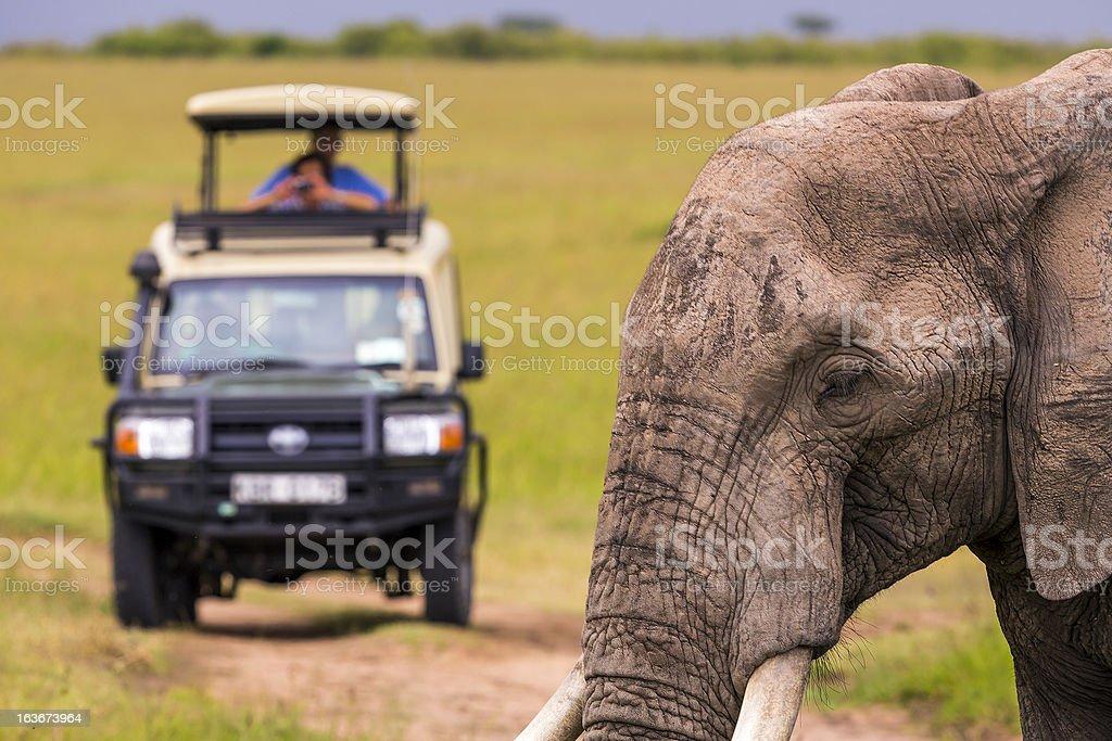 Wildlife viewing in Africa on Masai Mara Safari Tour stock photo
