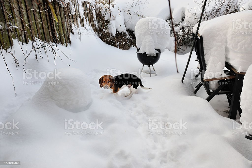 Will winter ever end royalty-free stock photo