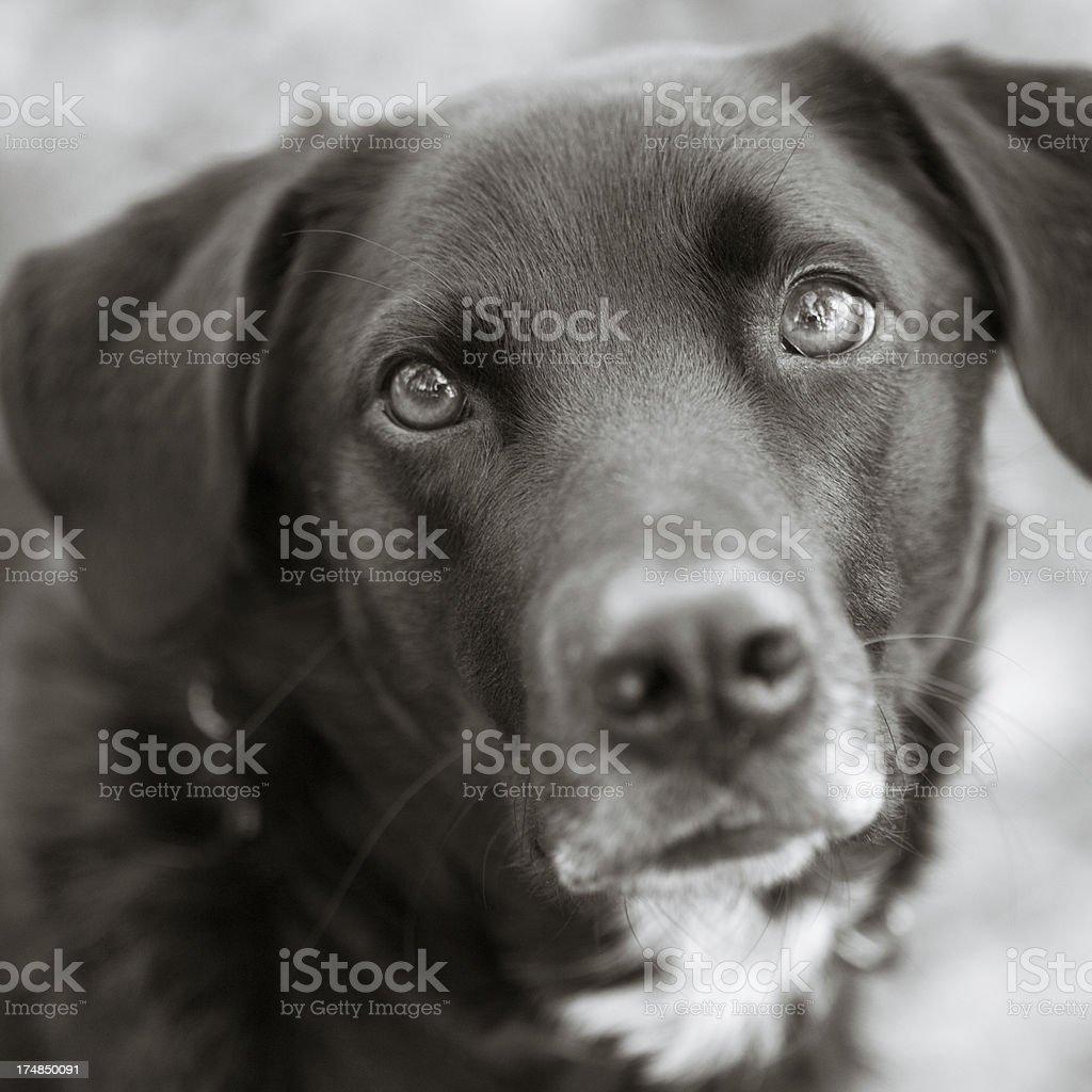 Will you adopt me, please? stock photo