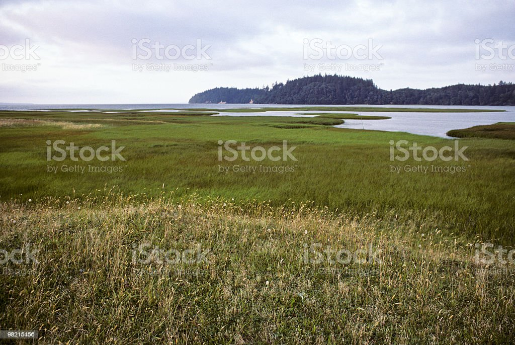 Saltwater Marsh and Grasses stock photo