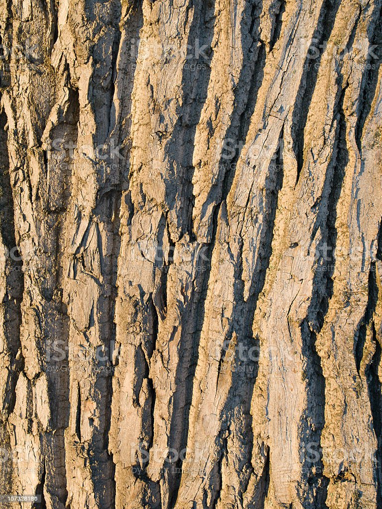 Willow bark stock photo