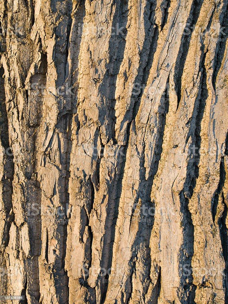 Willow bark stock photo